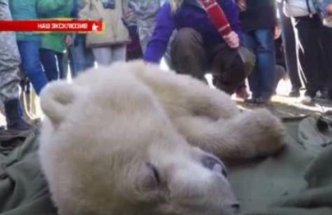 Московский зоопарк приютил медвежонка изКрасноярского края