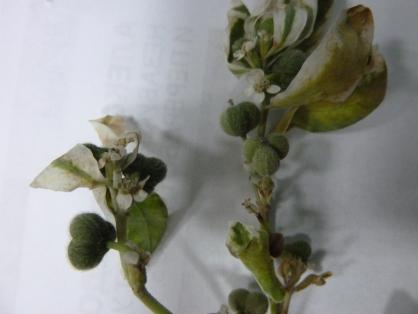 Семенами ядовитого растения склумбы вдетском саду Абакана отравились маленькие дети