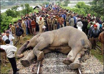 Поезд сошел с рельсов в Индии: около 100 погибших, более 200 ранены - Цензор.НЕТ 4783