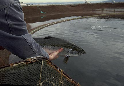 Хакасии помогут с рыборазведением
