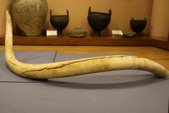 Семья изХакасии нашла кости мамонта